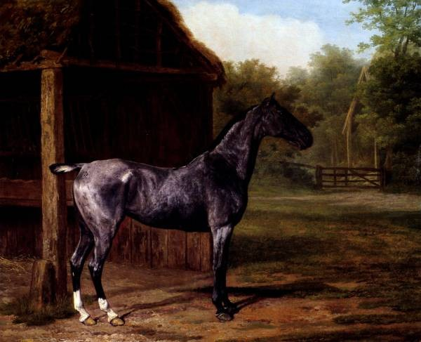 Lord Rivers Roan Mare In A Landscape
